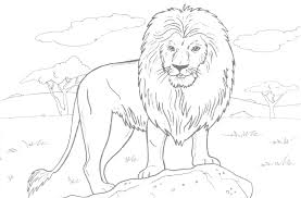 African Lion Coloring Page 01