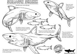 Coloring page baby shark for kids. Shark Education Coloring Sheets