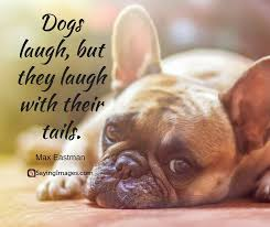 Quotes About Dogs Magnificent 48 Inspirational Dog Quotes About Life And Love PlayBarkRun