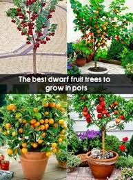 519 Best Bonsai Images On Pinterest  Bonsai Bonsai Trees And Indoor Fruit Trees Low Light