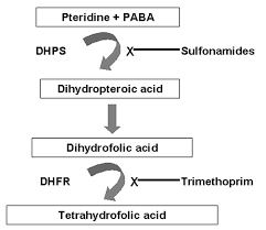 Figure   Dihydropteroate Synthase Gene Mutations in Pneumocystis     Centers for Disease Control and Prevention
