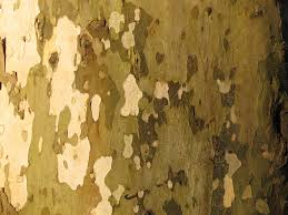 tree structure wood texture leaf trunk wall bark plane log pattern green soil close material painting