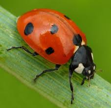diffe types of garden pests