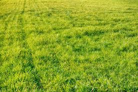 green grass field texture background grass field texture f31 field