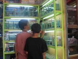 Toko Pakan Ikan Cupang Terdekat