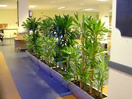 office plant displays. Delighful Office Best Office Plants For Your Decoration Green Offices  Plant Container Combinations In Displays I