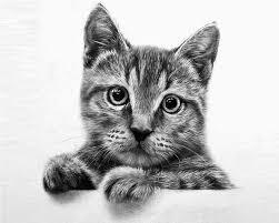 realistic cat drawing in pencil. Unique Pencil Fine Art And You 20 Beautiful Realistic Cat Drawings To Inspire You And Drawing In Pencil O