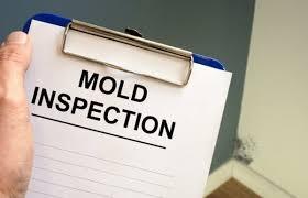 hire professionals to remove mold