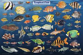Saltwater Fish Chart Saltwater Aquarium Fish Identification Aquarium Design Ideas