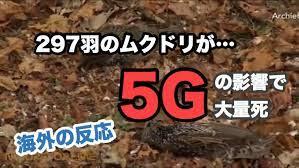 5g ムクドリ