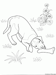 Small Picture Coloring page Dogs