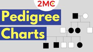 Inheritance Patterns Reading Pedigree Charts