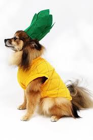 Ups Dog Costume Size Chart Pineapple Dog Costume