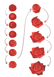 how to draw or paint simple roses cute and easy tutorial for doodling or sketching these beautiful flowers