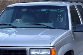 air conditioner car window. dog-in-hot-car.jpg air conditioner car window e