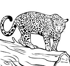 27 Jaguar Coloring Sheet Idealimpressions