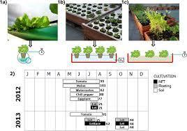 crops for efficient rooftop gardens
