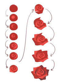Small Picture The 25 best How to draw roses ideas on Pinterest Flowers to