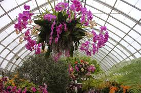in addition the orchids aren t simply on display here and there they are suspended from the ceiling and from the tops of trees and arches truly living up