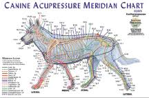 Chinese Meridian Chart Pdf Acupuncture Meridians Chart Pdf Best Picture Of Chart