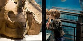 In <b>dinosaur</b> footprints at Burke Museum