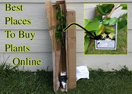 order plants online. Best Places To Plants Seeds Online Order P