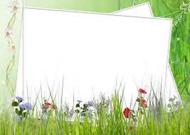 Green And White Transparent Frame With Field Flowers Gallery