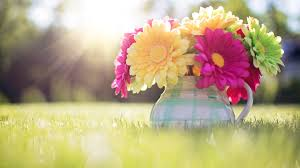Image result for spring of a beautiful field and a mug of yellow, pink, and green daisies