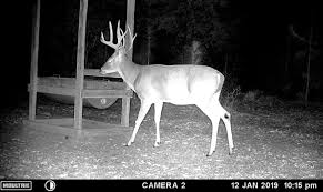 Which Deer Visit Feeders And When New Research Is Out Qdma