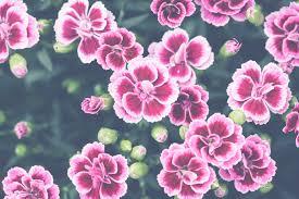 Gratis Afbeeldingen Bloeien Bloeiend Bloesem Botanisch Helder