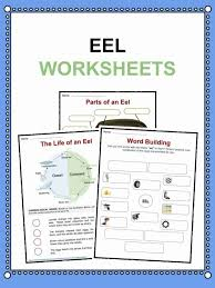Eel Facts, Worksheets & Information For Kids