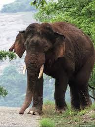 Elephant Wallpaper Hd 1080p - wallpaper