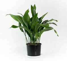identifying indoor plants common house plants for common indoor plants uk