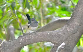 11 letter bird names letterjdi co