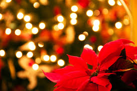 Why Poinsettias Are the Official Christmas Flower? | Reader