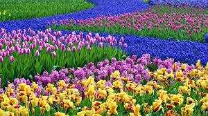 free spring wallpapers spring wallpaper puter ①