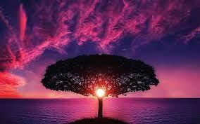 no29-sea-tree-purple-sky-nature-red ...