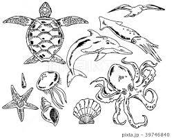 夏 海の生き物 イラストセット 線画のイラスト素材 39746840 Pixta
