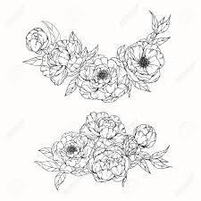 牡丹の花を描くと白い背景の線画でスケッチ