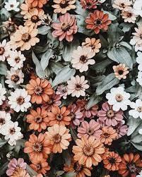 Desktop Wallpaper Floral Aesthetic