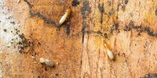 Image result for method of controlling termites US