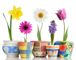 spring flowers hd free wallpapers for