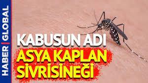Yeni Kabus: Asya Kaplan Sivrisineği! Agresifçe Saldırıyor, Yara Açıyor -  YouTube