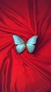 beautiful butterfly iphone 6 wallpaper ...