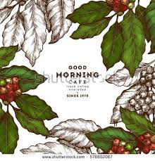 coffee plant illustration vector. Plain Coffee Coffee Tree Illustration Engraved Style Vintage Coffee  Frame Vector Illustration And Plant Illustration