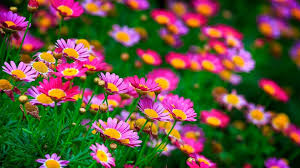 most beautiful flowers wallpapers on