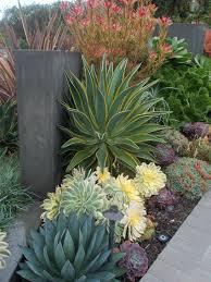 Cactus Succulent Landscape Design Desert Landscape Design Garden Succulent Landscaping Plants
