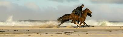 Take Your Horse On Holiday At The Beach