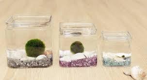 marimo moss ball glass cube terrarium