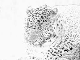 Coloriage Leopard N B Imprimer Pour Les Enfants Dessin